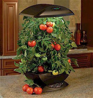 Aerogarden - cultivo de tomates
